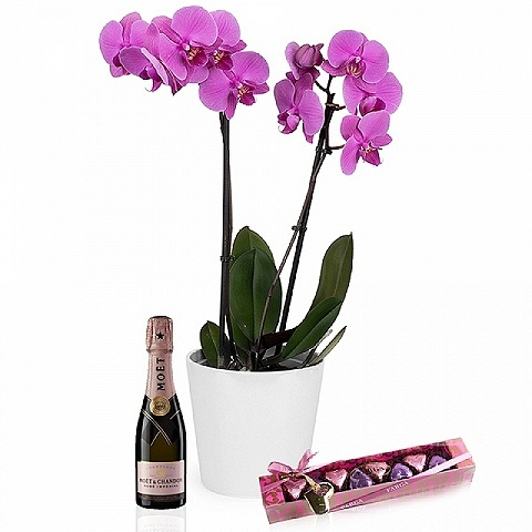 Mom's dream: orchid, chocolates and champagne